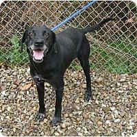 Adopt A Pet :: Marshall - Toronto/Etobicoke/GTA, ON