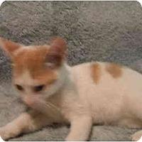 Adopt A Pet :: Moe - Jenkintown, PA