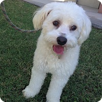 Adopt A Pet :: Binky - Scottsdale, AZ