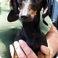 Adopt A Pet :: Teeny Turner - Gainesville, FL
