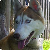 Adopt A Pet :: NIKITA - Jacksonville, FL