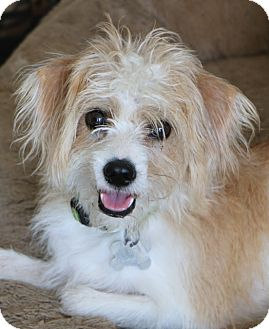 Terrier (Unknown Type, Small) Mix Dog for adoption in Woonsocket, Rhode Island - Quinn - MEET ME