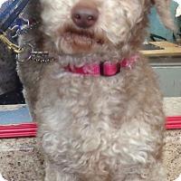 Adopt A Pet :: Dino - Crump, TN
