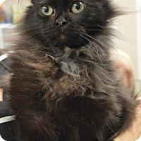 Adopt A Pet :: Petunia - Pendleton, NY