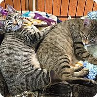 Adopt A Pet :: Pierre & Paris - Horsham, PA