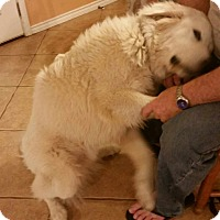 Adopt A Pet :: Beaumont - Kyle, TX