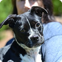 Adopt A Pet :: Abigail Mia - Acworth, GA