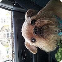 Adopt A Pet :: Marvin - Cumberland, MD