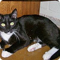 Adopt A Pet :: Sox - Scottsdale, AZ