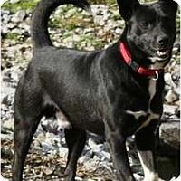 Adopt A Pet :: Mugsy - Allentown, PA
