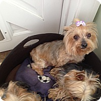 Adopt A Pet :: Miley - Orange County, CA
