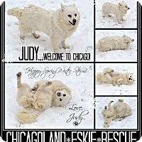 Adopt A Pet :: Judy - Elmhurst, IL