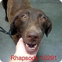 Adopt A Pet :: Rhapsody - Greencastle, NC