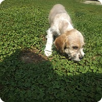 Adopt A Pet :: Buster - Quincy, IN