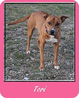 Australian Cattle Dog Mix Dog for adoption in Hillsboro, Texas - Tori