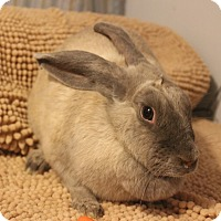 Other/Unknown Mix for adoption in Hillside, New Jersey - Anastasia