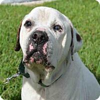 Adopt A Pet :: MAC - West Palm Beach, FL