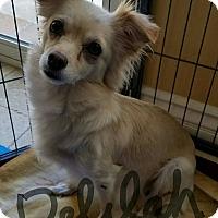 Adopt A Pet :: Delilah - Thousand Oaks, CA