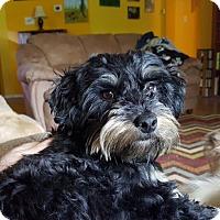 Adopt A Pet :: Clipper - Redmond, WA