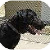Adopt A Pet :: DYNA - San Diego, CA