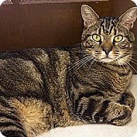 Adopt A Pet :: Buddha - Lancaster, MA