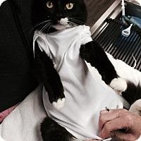 Adopt A Pet :: Bob the Cat - McDonough, GA
