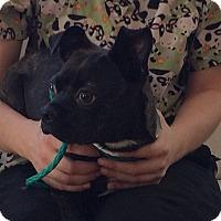 Adopt A Pet :: Vito - Rockaway, NJ