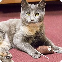 Adopt A Pet :: Shasta - Chicago, IL