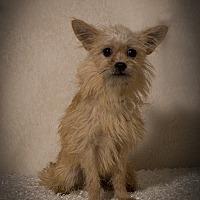 Adopt A Pet :: Wells - Davie, FL