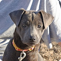 Adopt A Pet :: Shelby - PENDING, in Maine - kennebunkport, ME