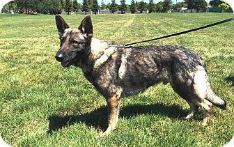 German Shepherd Dog Dog for adoption in Pleasant Grove, California - Onyx