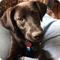 Adopt A Pet :: Jack - Lakeville, MN