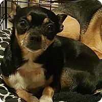 Adopt A Pet :: Precious - West Valley, UT