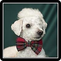 Adopt A Pet :: Mister - San Diego, CA