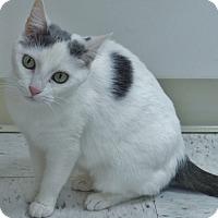 Adopt A Pet :: Princess - Chambersburg, PA
