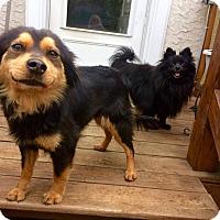 Adopt A Pet :: Rose - Media, PA