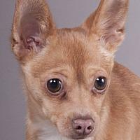 Adopt A Pet :: Qbert - Chicago, IL