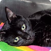 Adopt A Pet :: Jade - Grants Pass, OR