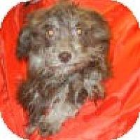 Adopt A Pet :: Pinar - Antioch, IL