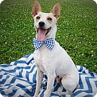 Adopt A Pet :: Sampson - Princeton, KY