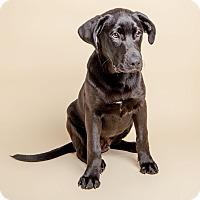 Adopt A Pet :: Bergen - Brooklyn, NY