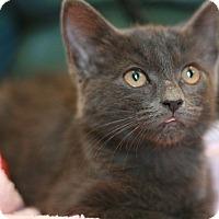 Adopt A Pet :: Mishka - Canoga Park, CA