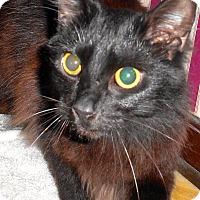 Adopt A Pet :: Sylvia - Chattanooga, TN