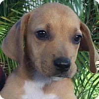 Adopt A Pet :: Grandview#3F - Orlando, FL