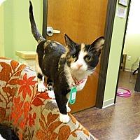 Adopt A Pet :: Minerva - The Colony, TX