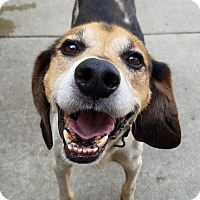 Adopt A Pet :: Chewie*ADOPTED!* - Chicago, IL