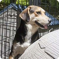 Adopt A Pet :: Sandy - Poland, IN