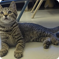 Adopt A Pet :: Badger - Manning, SC