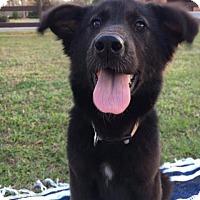 Adopt A Pet :: Bunny - Waycross, GA