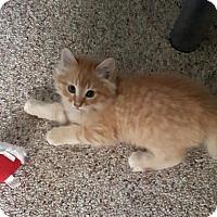 Adopt A Pet :: Sunny - Pasadena, CA